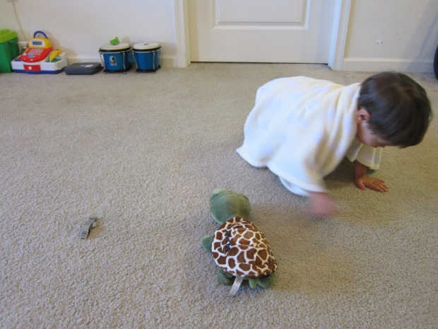 Turtle Shell (3)