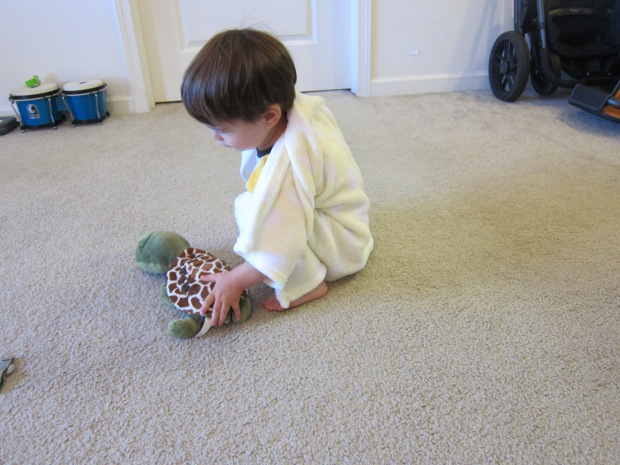 Turtle Shell (4)