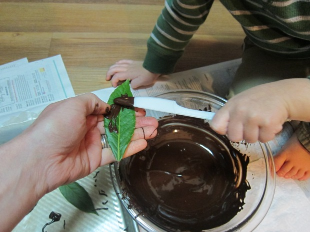chocolate-leaves-4