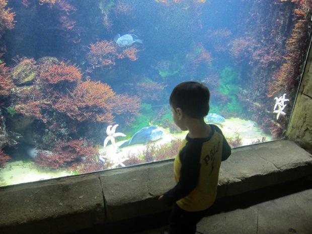aquarium (1)