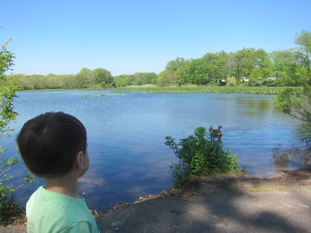 Pond (1).JPG