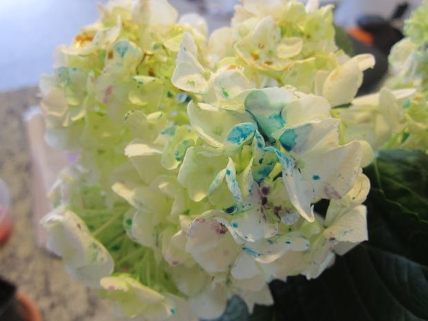 Painted Hydrangea (7)