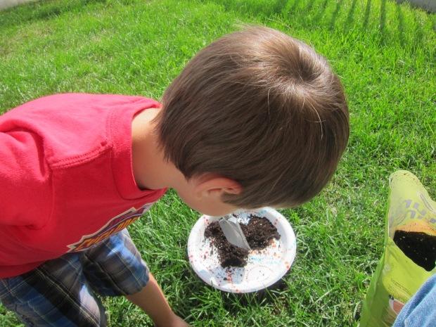 Mud Pies (1)