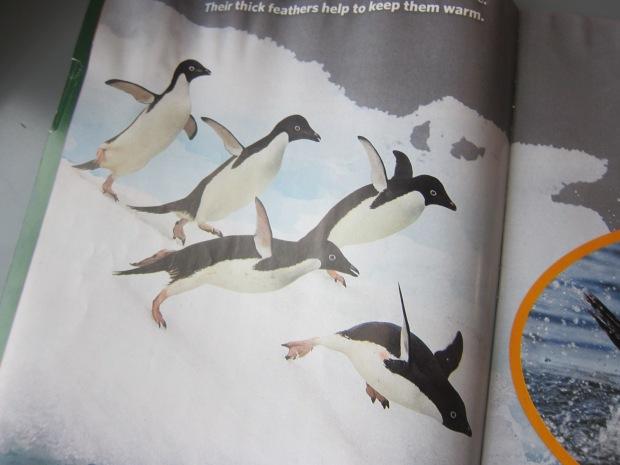 Egg Penguin (3)