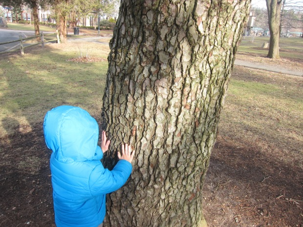 pine tree (1)
