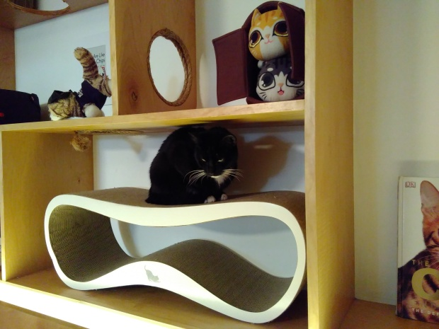 Meow Parlor (6)