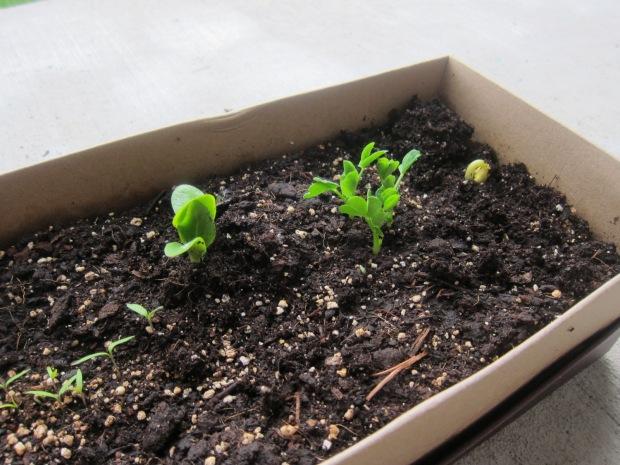 Plant a Garden alt