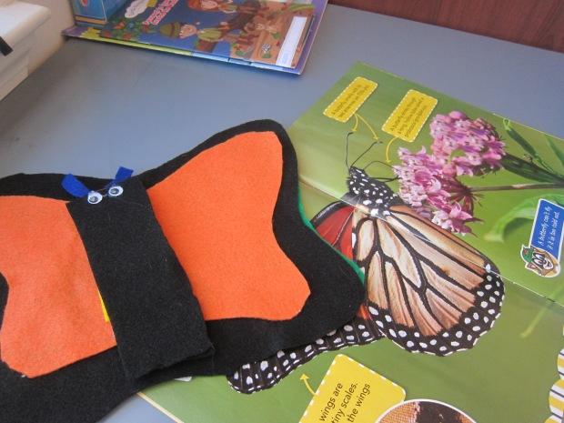 Butterfly (9)