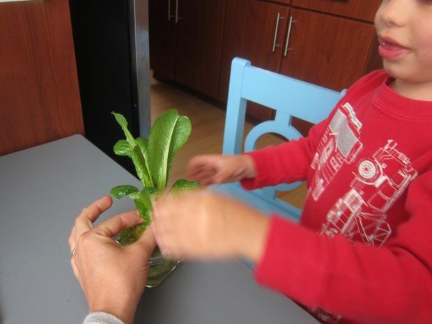 Grow Garden var