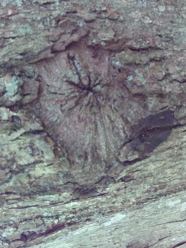 Nature alph q