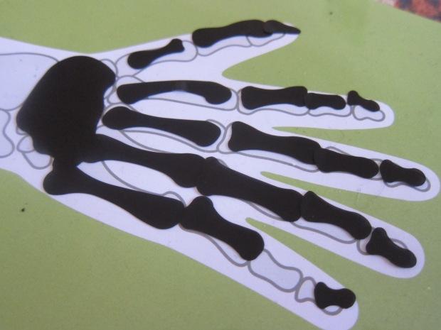 kiwi body (9)