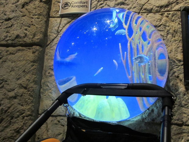 Aquarium (10)
