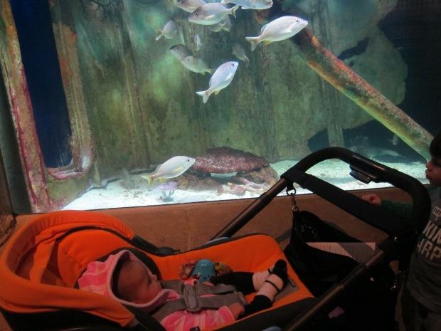 Aquarium (4)