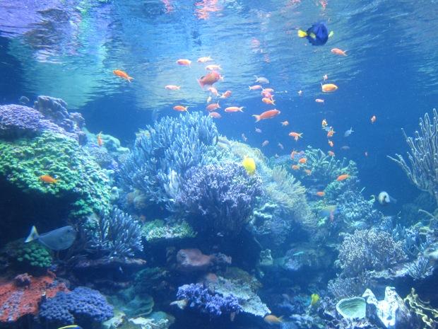 Aquarium (9).JPG