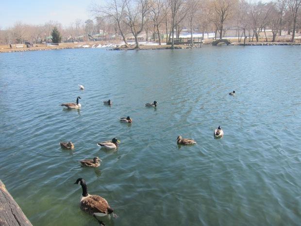 Feed the Ducks (6)