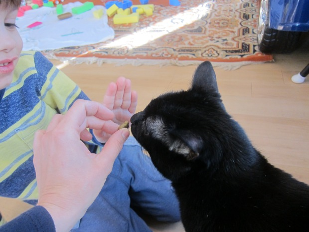 Cat High Five (3)