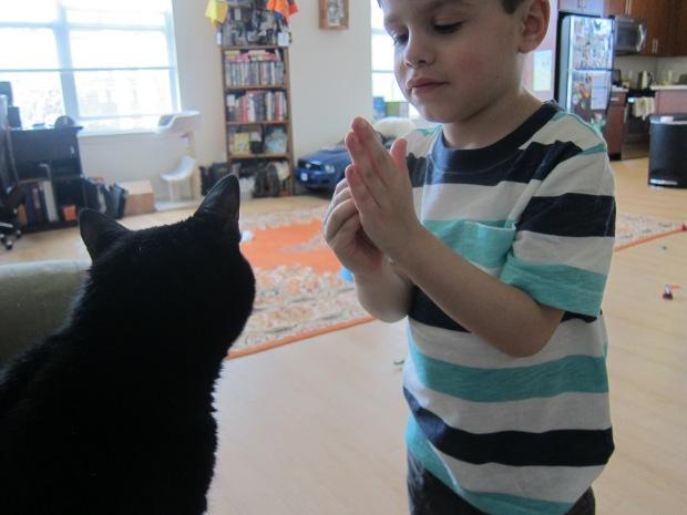 Cat High Five (6)