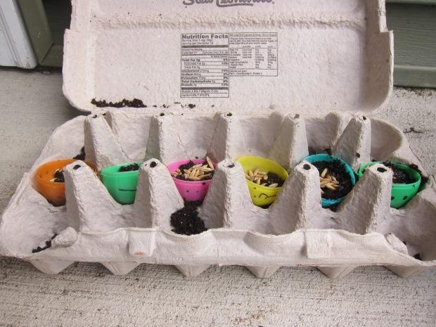 Eggheads (5)
