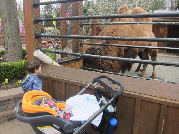 Go to Zoo (8)
