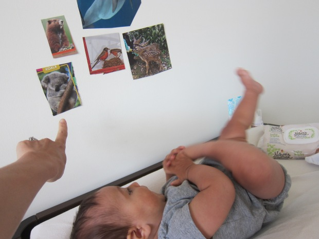 Animal Diaper Time (2)