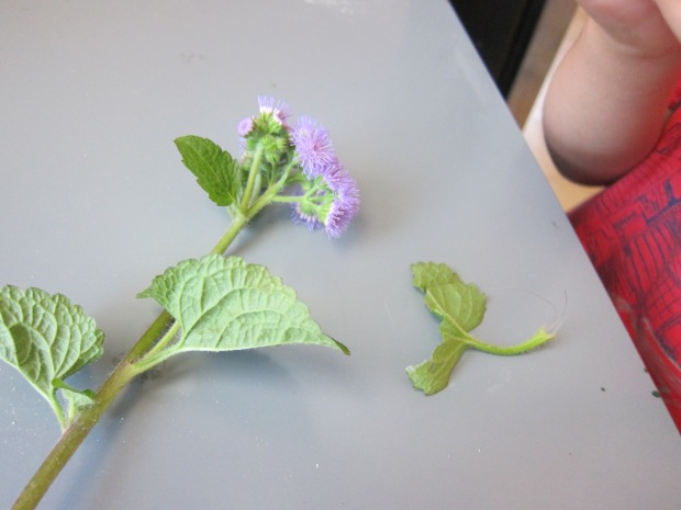 Pollinators (1)