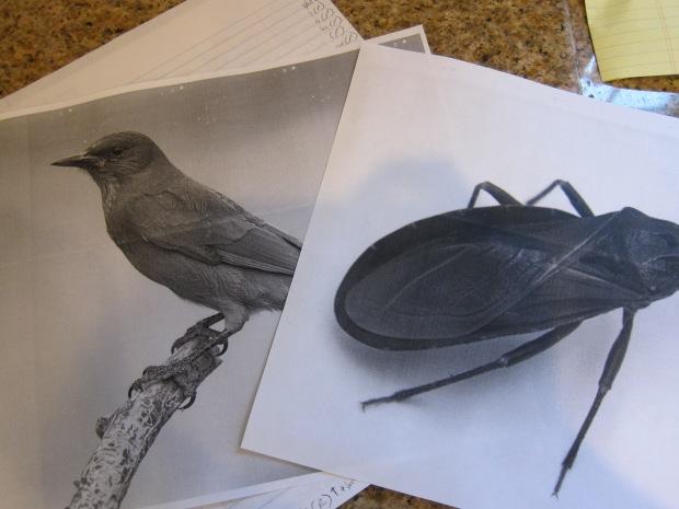 Bugs v Birds (1)