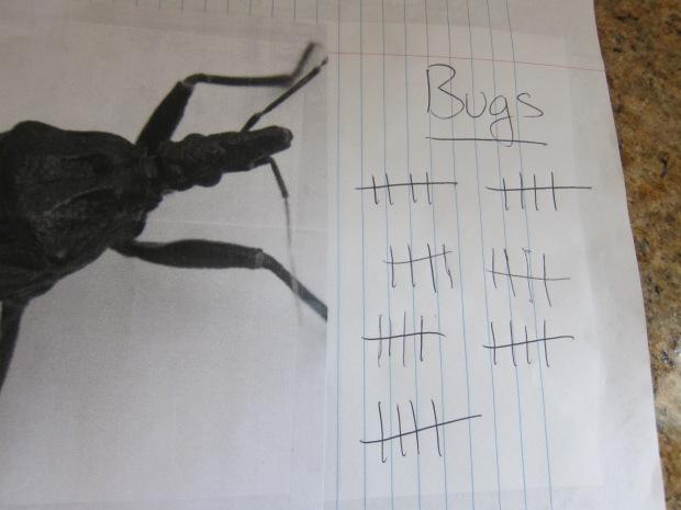 Bugs v Birds (3).JPG