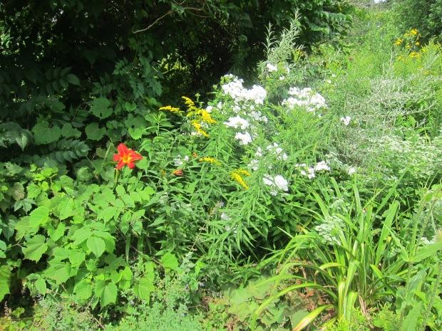 Botanical Garden (7).JPG