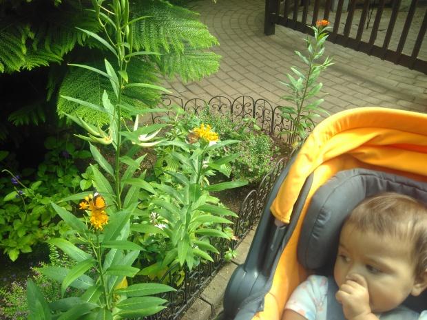 Butterfly Garden (2)