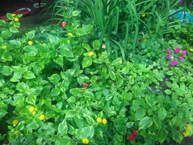 Butterfly Garden (5)