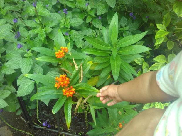 Butterfly Garden (7)