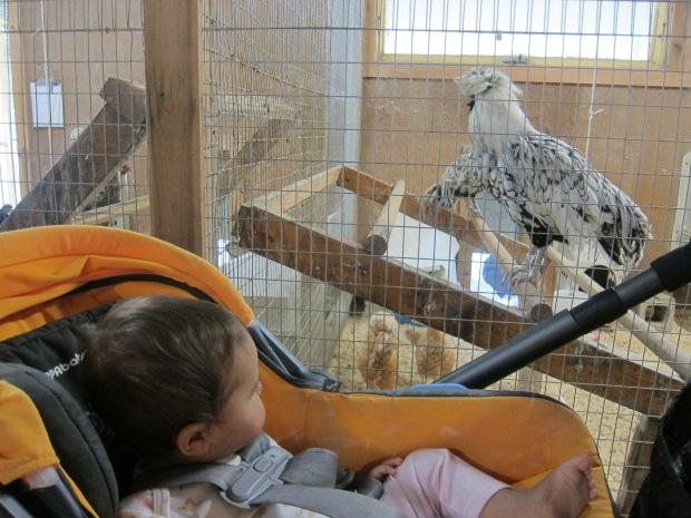 Summer Zoo (2)