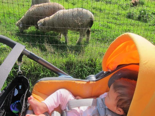 Summer Zoo (3)
