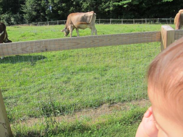 Summer Zoo (4)