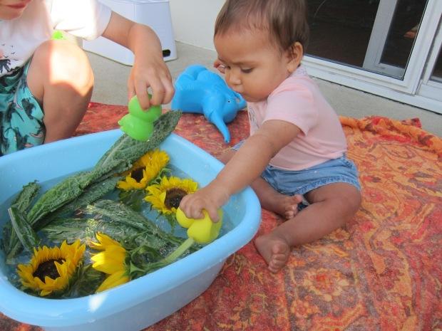 Water Garden (7)