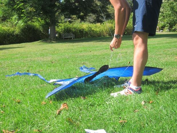 Fly a Kite (1)