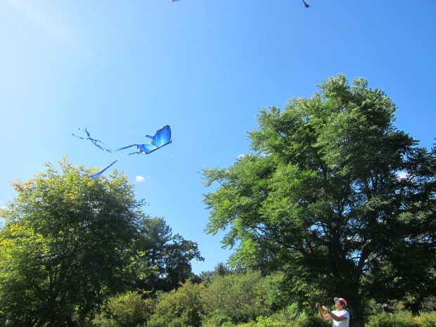 Fly a Kite (3)