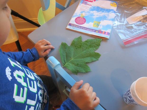 Leaf Craft Challenge (1)