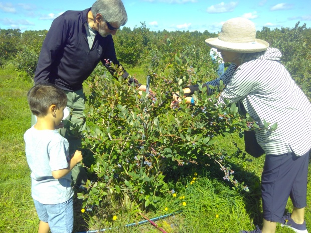 orchard (4).jpg