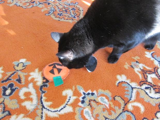 Catnip Toys (7)