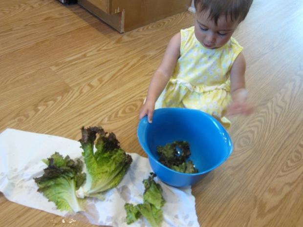 Lettuce Tear (1)