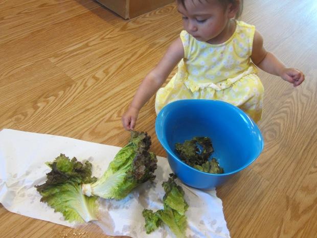 Lettuce Tear (2)