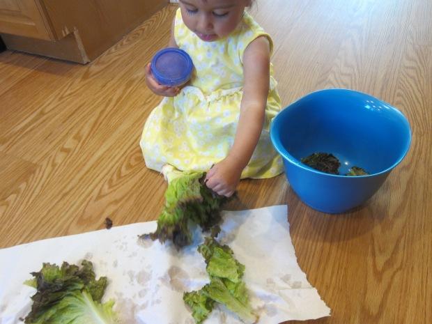 Lettuce Tear (3)