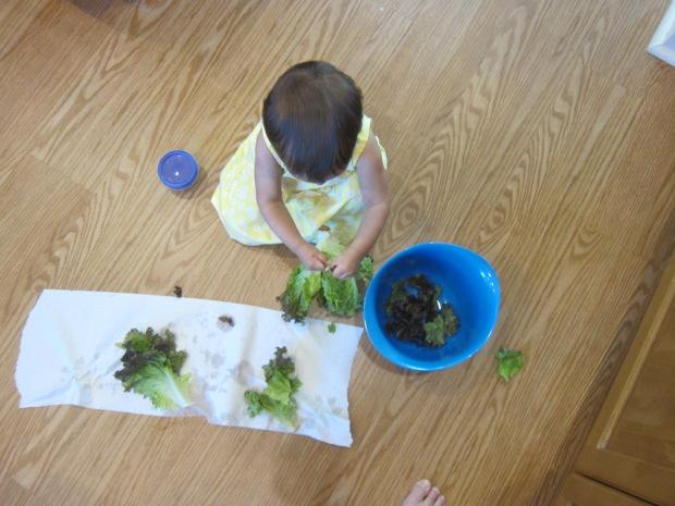 Lettuce Tear (4)
