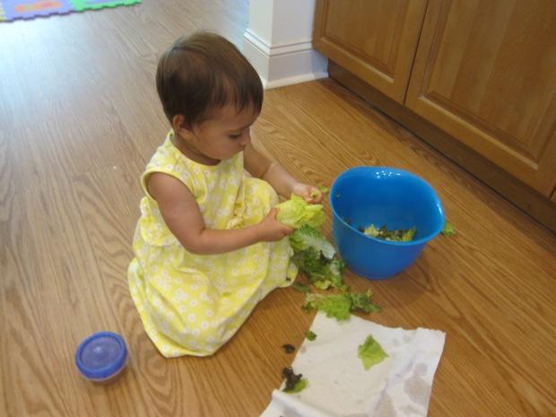 Lettuce Tear (5)