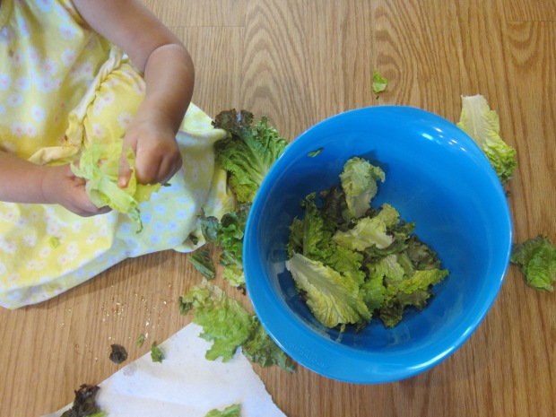Lettuce Tear (6)