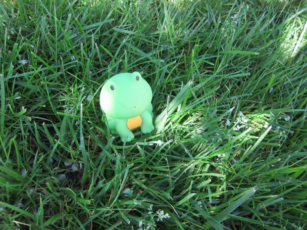 Frog in the Grass (10)