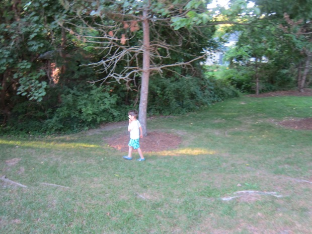 Start a Tree (1)