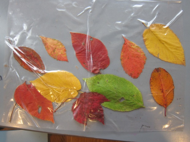 Leaf Scrunch (13)
