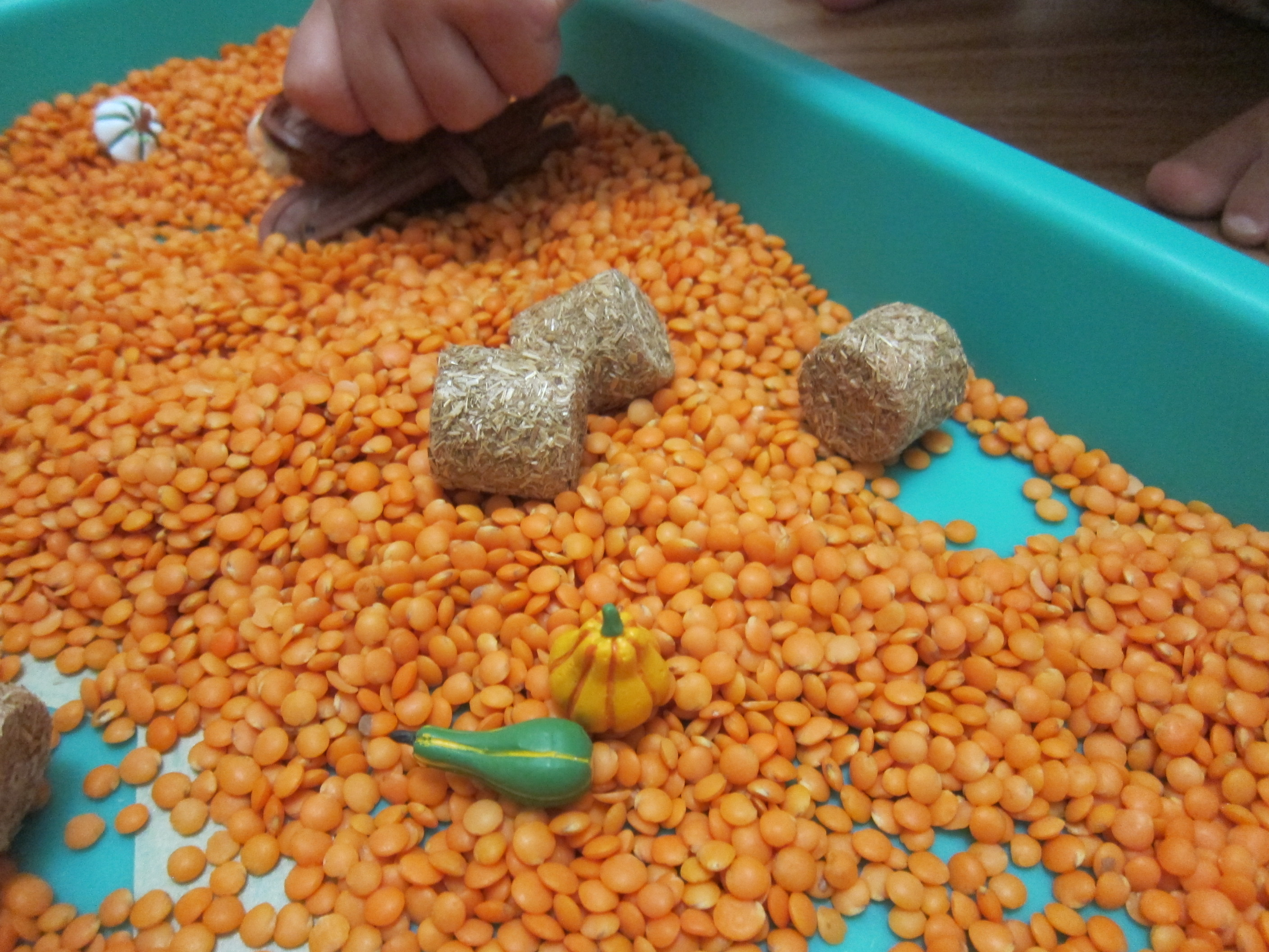 Maze Through Lentils (8)